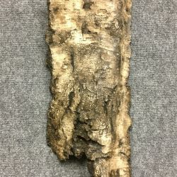 decorative concrete birch bark 3