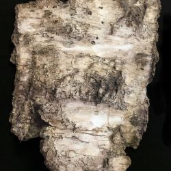decorative concrete birch bark torso 1
