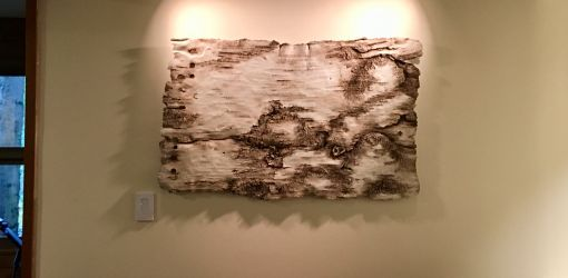 decorative concrete interior birch bark yellowbelly 1