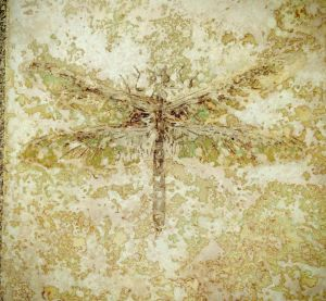 decorative concrete acid stain dragonflyly tile
