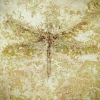 decorative concrete interior design acid stain dragonflyly tile