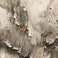 decorative concrete interior design birch bark texture